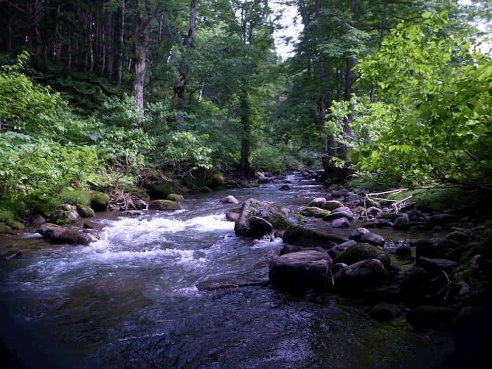 増水気味の渓流