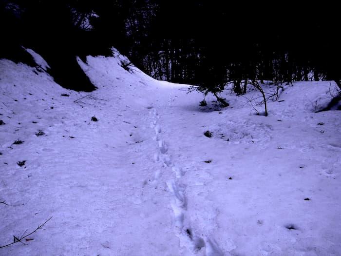 残雪に足跡