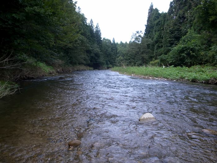 増水する本流